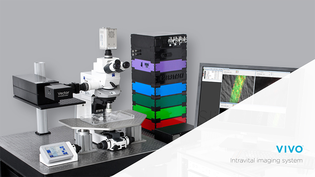 IntravitalMicroscope