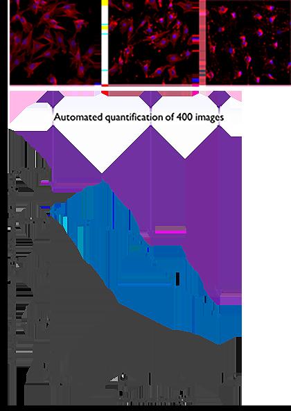 microscopy-automated_quantification